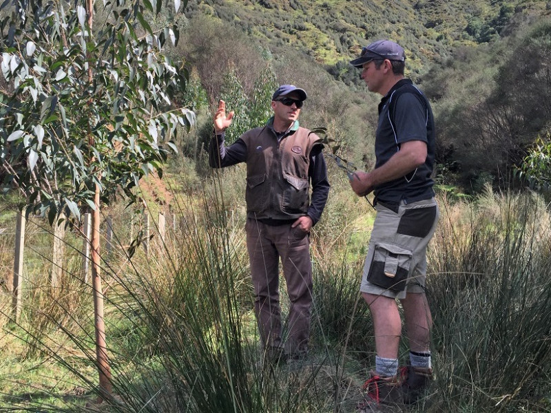 Tree planting in the Taranaki hillcountry.