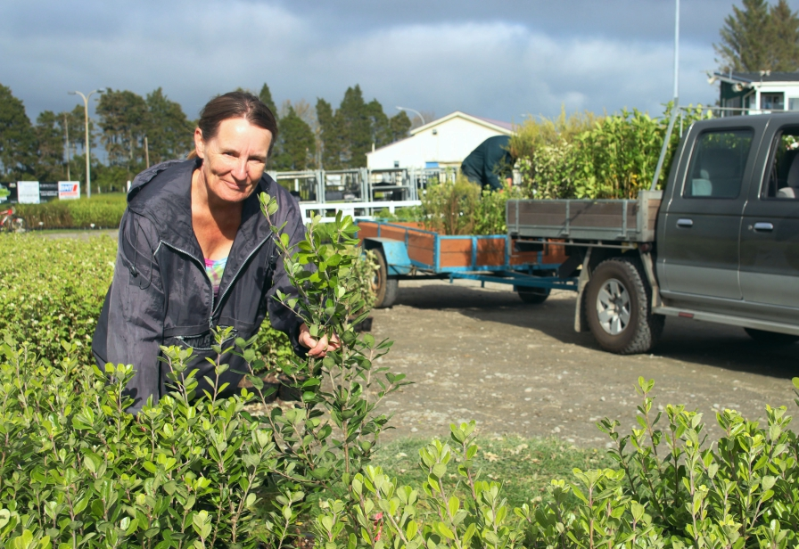 Plants are distributed to Taranaki farmers for streamside planting