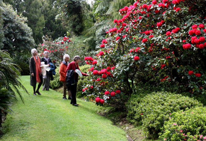 Image of Rhododendrons and exotic plants at Pukeiti