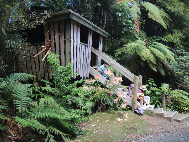 Pukeiti Kids treehouse trail Weta house
